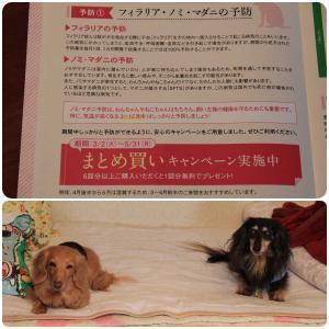 今年も狂犬病予防注射&フィラリ予防のお知らせが届いた ▼・。・▼」」」」ーワン!!