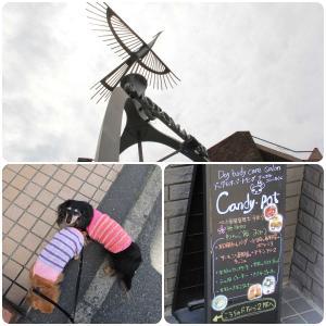横浜市中区『Candy・Pot』さんでドッグマッサージ 。.:*.゜☆(●´∀`●)ニコ.゜☆.。.:*.゜