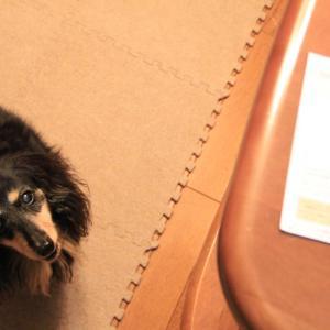 アニコム『腸内フローラ』測定のご案内が届いたよ 。.:*.゜☆(●´∀`●)ニコ.゜☆.。.:*.゜