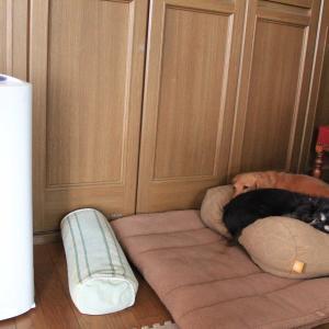 2台目の加湿器をお買い物o(*^▽^*)o