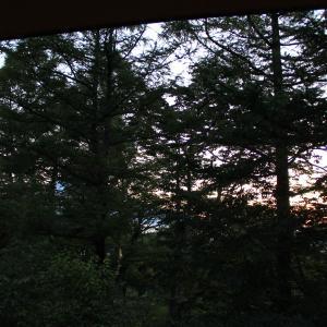 【お夕食編】山中湖『CARO FORESTA』でHITON誕生日おめでとうの旅 U^ェ^U ダワン!
