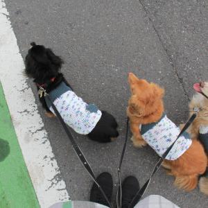 4人8ワン・狭山市『Popu's Natural Dog Cafe』さんでランチ \(^ω^\)( /^ω^)/ワーイ♪
