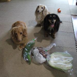 夏野菜もだーい好き。.:*.゜☆(●´∀`●)ニコ.゜☆.。.:*.゜