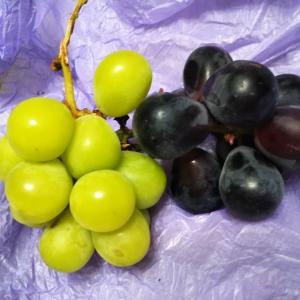 長野からの葡萄だより