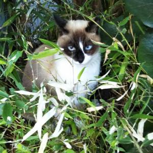 青い瞳のカワイイ猫ちゃん