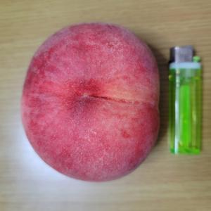 大きな桃をいただきました!