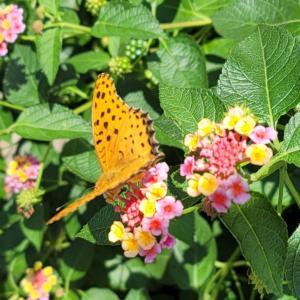 花とチョウチョ