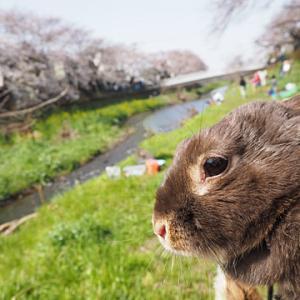 満開までもう少し…… ~弥生の空の桜散歩~