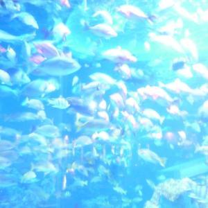 星と魚を楽しむ旅 後編
