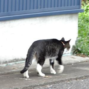 猫殿、お待ちを!(1007)