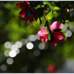 ■ 冬の花