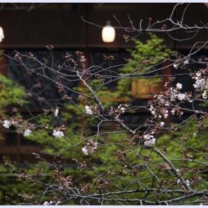 ■ 咲き始め