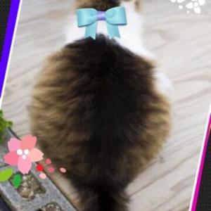 私と猫のダイエット・アベノマスクなんていらない・給付金は寄付しない