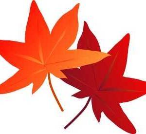 今頃、女二人で箱根をうろちょろ…小さな秋を探しに