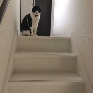 私の愛する連れ合いが階段上で待ってる…愛されてる実感あり