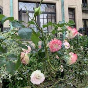 薔薇と洋館…東京ローズガーデンテラス紀尾井町