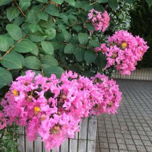 今日は雑感で…花・散歩・通院・シリカ水