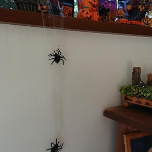 蜘蛛がいっぱい