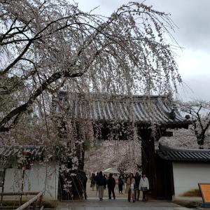桜さくらサクラ 2020