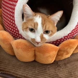 フルーツタルト猫
