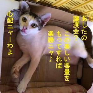 ぱっつん前髪猫 ココ猫ちゃん譲渡会に参加するの巻