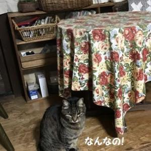テトちゃんの 聞いてないわ!(゚Д゚≡゚Д゚)!!!
