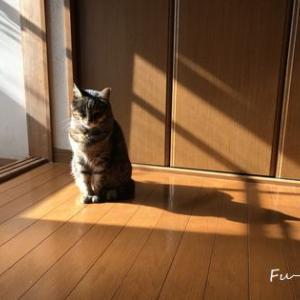 ふーとテトの陽だまり写真館*それぞれの日向ぼっこ*