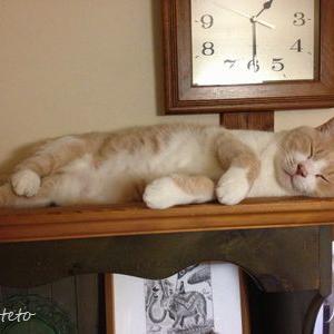 過去記事動画「太って足の短い猫はいかにして飾り棚の上にあがるか」