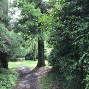 森を歩く&ワクチン二回目接種を終えました