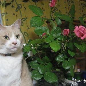ふーくん過去記事 きれいな薔薇にはとげがある。
