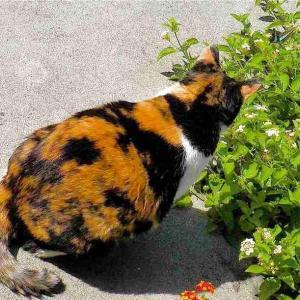 """""""8月8日は「世界猫の日」「蝶々の日」撮りためた中からネコ と チョウチョを"""""""