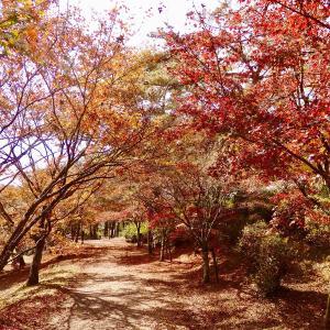 """また出かけたい""""曽木の滝公園*紅葉黄葉、愛でながら、迫力の大滝近辺を散策♫11月18日"""""""