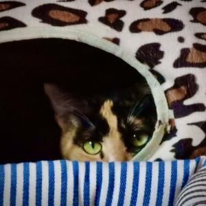 三毛猫ミミ日記〜ぽかぽか陽気に、ミミ、春スイッチ入りましたにゃん♪