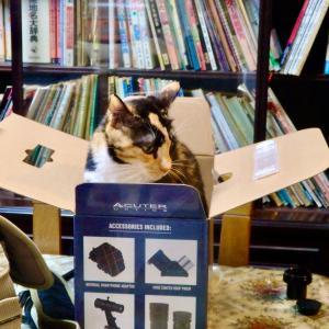 三毛猫ミミ日記〜今日、8月5日は、語呂合わせで「箱の日」にゃん♪ おまけは、子猫の頃のミミ