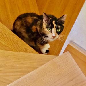 三毛猫ミミ日記〜秋めいてきて、ご機嫌猫日和ですにゃん♪