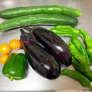 今朝の収穫@家庭菜園