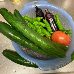 朝から晴天で野菜収穫!