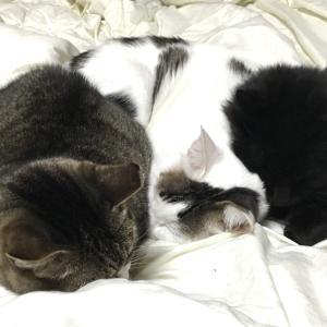 猫団子は幸せ