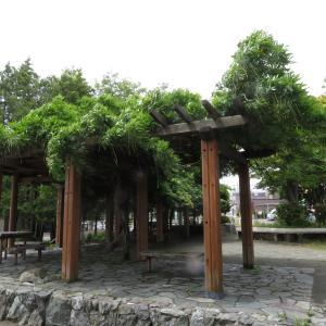 吉田川公園半分?