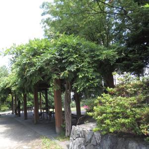 吉田川公園パート2