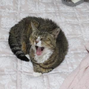 猫達の布団事情