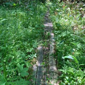 西岡レクの森〜自然歩道にも程があるだろ!〜月寒川左岸口