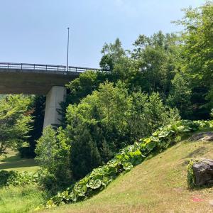 滝野すずらん丘陵公園〜白帆の滝から降りてみた〜