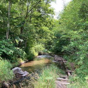 ふれあいの森の厚別川