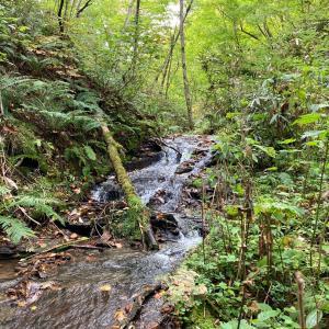 有明の滝〜川が見易くなって来た