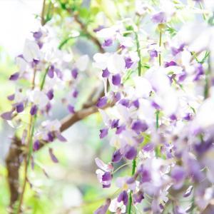【お庭のお花を素敵に撮る方法☆Photoポイント☆】