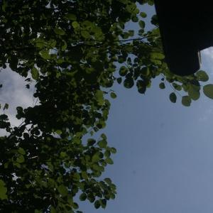やっと夏の青空が