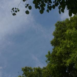 6月の青い空