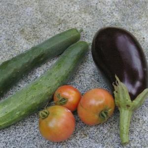 わが庭の収穫から