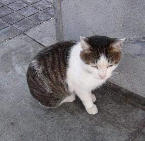 MINIMA14「囚人」撮影初日~猫のボンジョヴィ